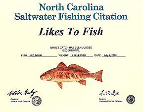 Outer banks offshore fishing season nc gulfstream for Nc saltwater fish